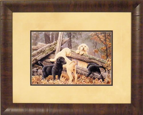 Pictures Of Yellow Labrador Puppies Pictures Of Yellow