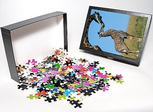 Photo Jigsaw Puzzle Of Reticulated Giraffe - Adult With Young