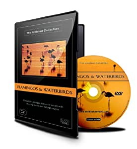 Relaxing Birds DVD - Flamingos & Water birds for Relaxation With The Sound Of Nature And Waterfowl