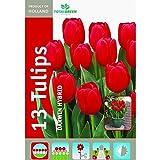 TotalGreen 72405200 Tulip Bulbs