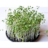Sprouting Seeds Broccoli and Friends 1 Pound Broccoli Seed, Crimson Clover Se...