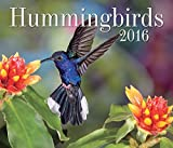 img - for Hummingbirds 2016 book / textbook / text book