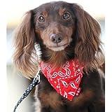 犬と生活 首輪に付けるバンダナ ペイズリー XS レッド