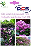 (031)-1 pack about 10 pieces, purple China Climbing Rose Seeds Beautiful Lovely DIY your home&garden