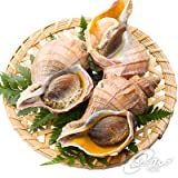 . 【 海鮮市場 北のグルメ 】活 真 つぶ 貝 大サイズ 1個 北海道産 ツブ
