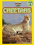 Cheetahs (A