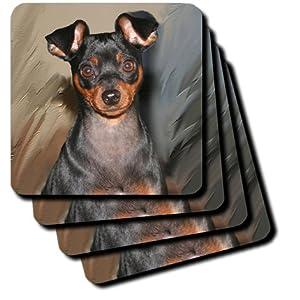 Amazon.com  cst_4555_1 Dogs Miniature Pinscher - Miniature Pinscher