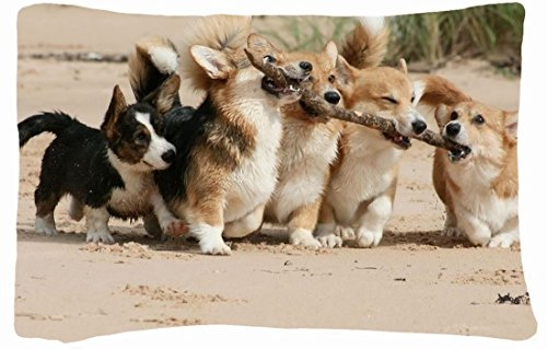 Microfiber Peach Standard Soft And Silky Decorative Pillow Case (20 * 26 Inch) - Nature Beaches Beach Sand Fighting Grass Puppies Corgi Branches Nature Beaches front-1011112