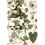Bind Weed, by Eugene Samuel Grasset (Print On Demand)