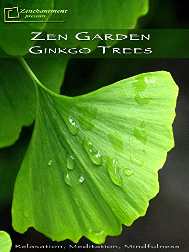Zen Garden Ginkgo Trees- Relaxation, Meditation, Mindfulness