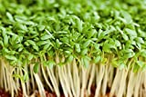 SeeKay Cress Plain/Common Appx 25,000 seeds