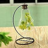 Bulb Shape Glass Vase Micro Landscape Eco Bottle With Holder