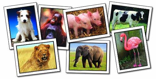 Carson Dellosa Key Education Favorite Animals Learning Cards (845011)