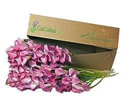 Mini Callas Pink 100 Stems