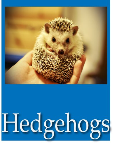 Free Kindle Book : Hedgehog Picture Book