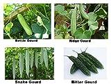 Easy Gardening Bottle Gourd+Ridge Gourd+Bitter Gourd+Snake Gourd Seeds Kit