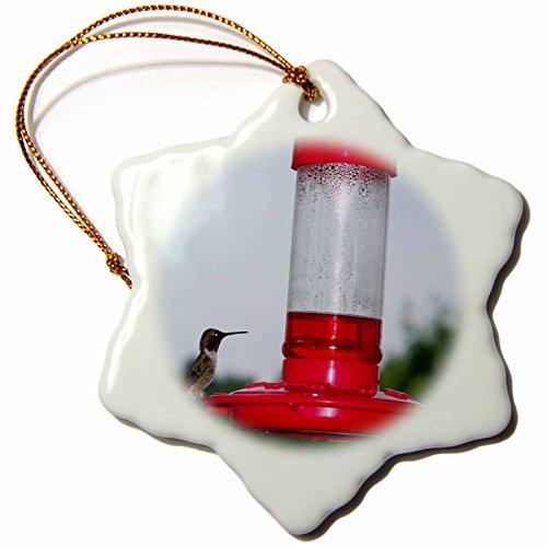 3dRose orn_14197_1 Hummingbird on Feeder Porcelain Snowflake Ornament, 3-Inch
