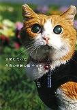 天使になった全盲の奇跡の猫チョキ
