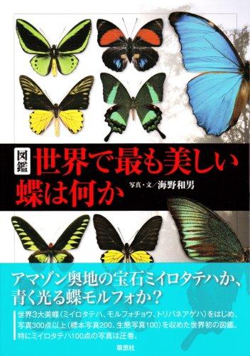 図鑑 世界でいちばん美しい蝶は何か 書影