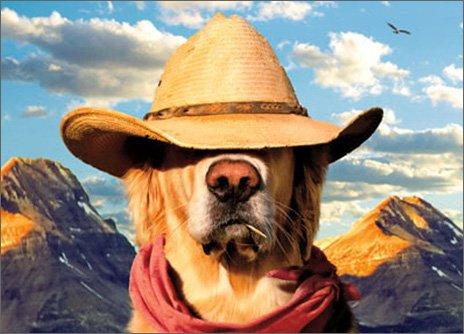 Dog With Straw Hat Funny Card