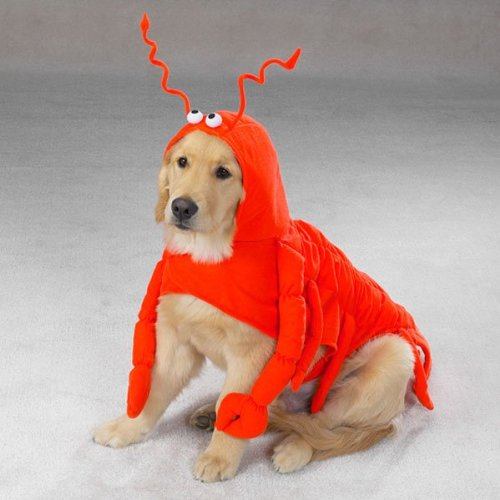 Casual Canine 30-Inch Polyester Lobster Paws