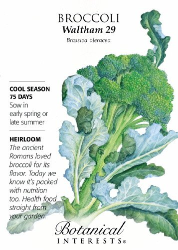 Broccoli Waltham 29 Seed