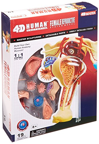 Famemaster 4D-Vision Human Female Reproductive Anatomy Model (Uterus Model compare prices)