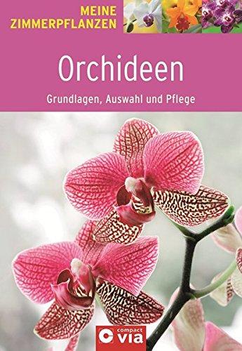 orchideen-grundlagen-auswahl-und-pflege-orchideeenzauber-fur-die-wohnung-meine-zimmerpflanzen