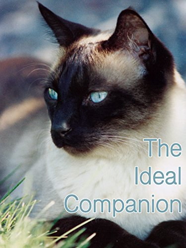 The Ideal Companion