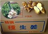 黄金生姜 10kg (中国産近江生姜)