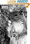 Kalender 2013 - Eichh�rnchen: DIN A5,...