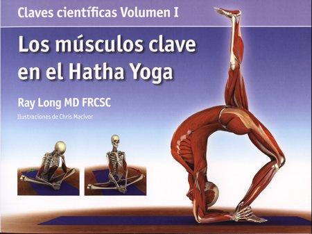 Los músculos clave en el hatha yoga