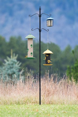 Bird Feeder Station