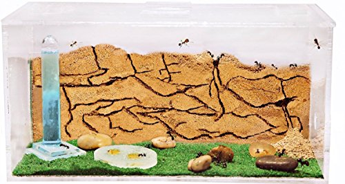 ant-farm-with-free-ants-and-queen-educational-formicarium-for-live-ants