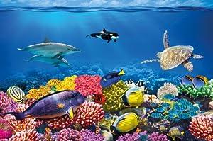 Amazon.com: Undersea coral reef photo wall paper - aquarium fish sea