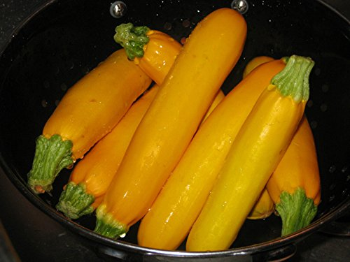 "1G (Approx. 7) Yellow Zucchini Seeds ""Atena Polka H"" Dietary Helps To Reduce Weight 'Fresh Seeds - Best Before 12.2017!'"