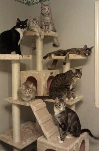 Amazon Canada Amazon Ca Reseller 71 Cat Tree Condo 101