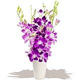 Eden4flowers Penang Cut Orchids - Flowers & Bouquets Delivered