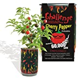Cherry Pepper All-included-Planter Kit ...Just Open..water...watch It Grow!!!