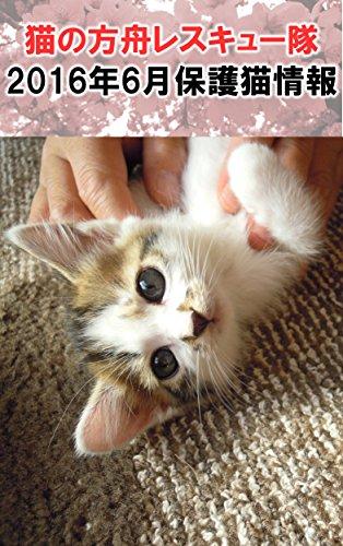猫の方舟レスキュー隊2016年6月保護猫情報