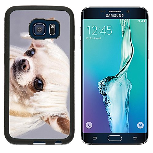 MSD Premium Samsung Galaxy S6 Edge Aluminum Backplate Bumper Snap Case beautiful dog close up portrait Image ID (Cute And Easy Hairstyles For Halloween)