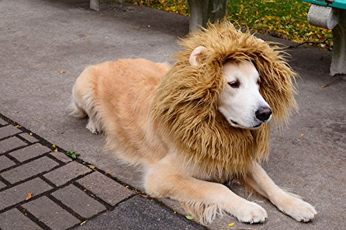 RD Lane Lion Mane Wig Hair Large Dog Costume Halloween Cloth Festival Party Fancy Style Dress up With Ear (Color:Light Brown). (Lion Head Costume compare prices)