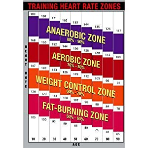 Amazon.com: (13x19) Training Heart Rate Zones Chart (Bright) Poster