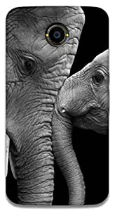 The Racoon Lean printed designer hard back mobile phone case cover for Google Nexus 6. (Elephants)