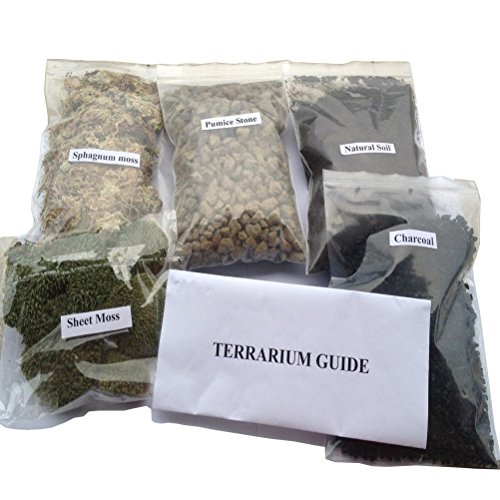 AmgateEu-TerrariumFairy-Garden-DIY-Kit-Create-Your-Own-Living-Terrarium-or-Fairy-Garden-Planting-Kit