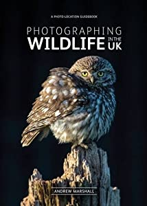 Photographing Wildlife in the UK - where and how to take great wildlife photographs from fotoVue