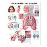img - for The Respiratory System Anatomical Chart book / textbook / text book