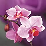 Indoor Balcony Office Rare Orchid Seeds Phalaenopsis Orchid Bonsai Pot Home Garden Plants Flowers Seeds 200PCS