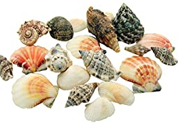 Seashells in Net Bag Which Includes an Assortment of Natural Beach Sea Shells