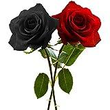 (2 Packs) Rose Flower Seeds Combo Of (Black, Red) - BEE Garden Organic